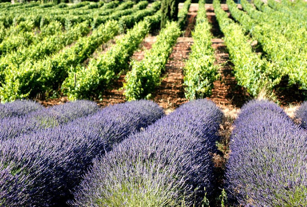 Paysage Vignoble Provence France