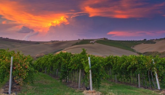 Paysage Vignoble Marches Italie